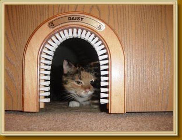 Echa un vistazo a 11 creativos de bricolaje Home Proyectos para los dueños de gatos en http://artesaniasdebricolaje.ru/11-creative-diy-home-projects-for-cat-owners/
