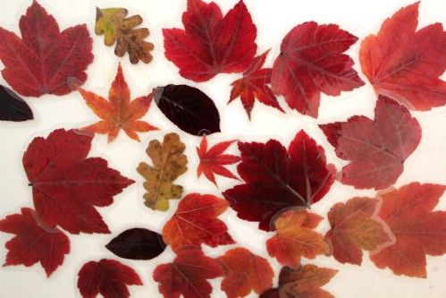 Hoja Imanes - 15 Fabulous Fall Leaf Crafts for Kids
