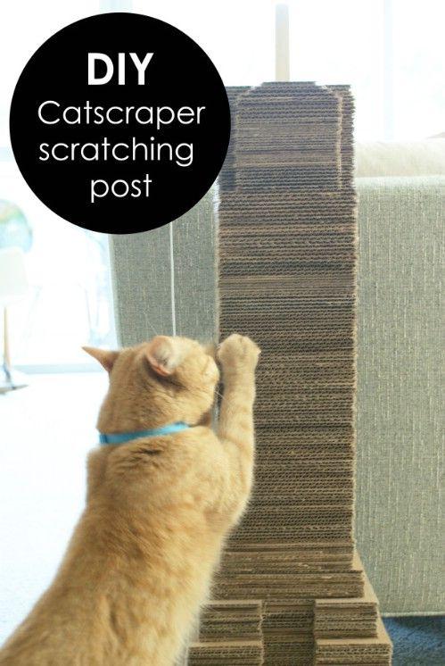 Cartón Catscraper