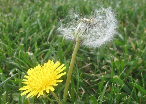 Caída Mantenimiento del césped - Weeding