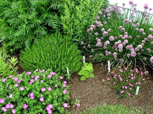 hierbas del jardín