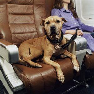 Mujer en el avión con el perro con correa en el asiento de al lado