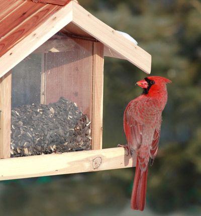 La Sociedad Audubon anima a la gente a convertir sus patios en los hábitats de aves