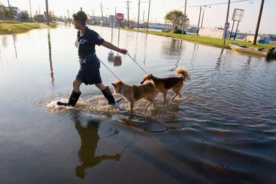 El rescate de los perros durante el huracán Katrina