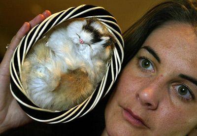 Gato del juguete hecho con piel de gato real