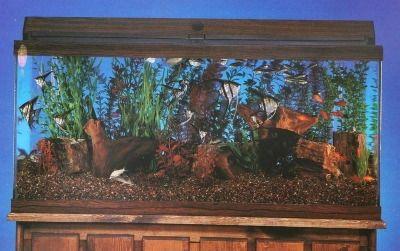 conceptos básicos de acuario, introducción
