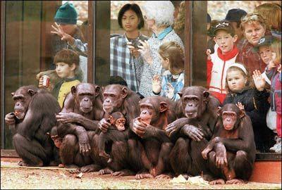 Fotografía - ¿Son zoológicos bueno o malo para los animales?