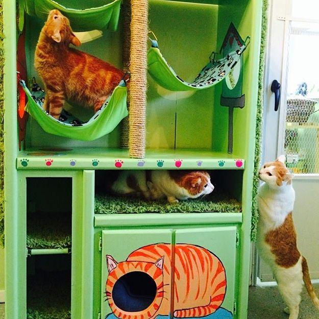 Enfriar bricolaje Proyectos para mascotas en venta Gatos | http://artesaniasdebricolaje.ru/best-diy-pet-projects-to-keep-your-furry-friends-happy/