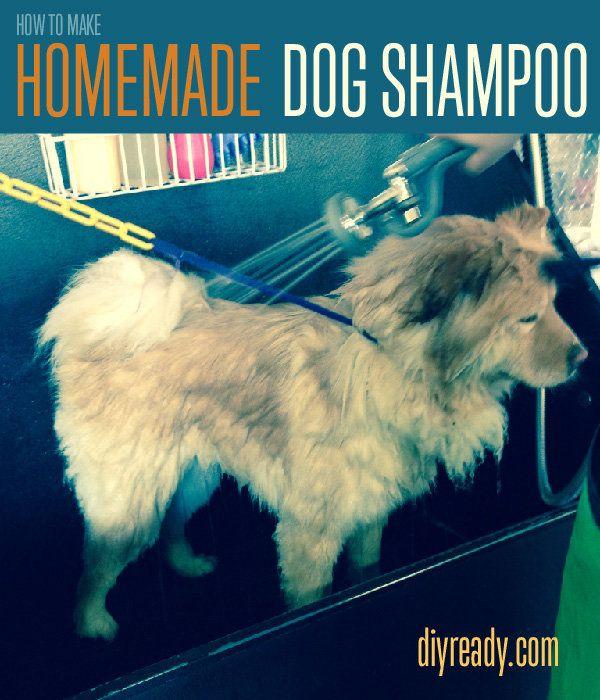 Fotografía - Cómo hacer casera champú para perros