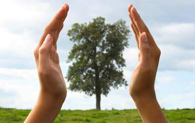 Consejos verdes para el Hogar - Conservación de Vida Silvestre