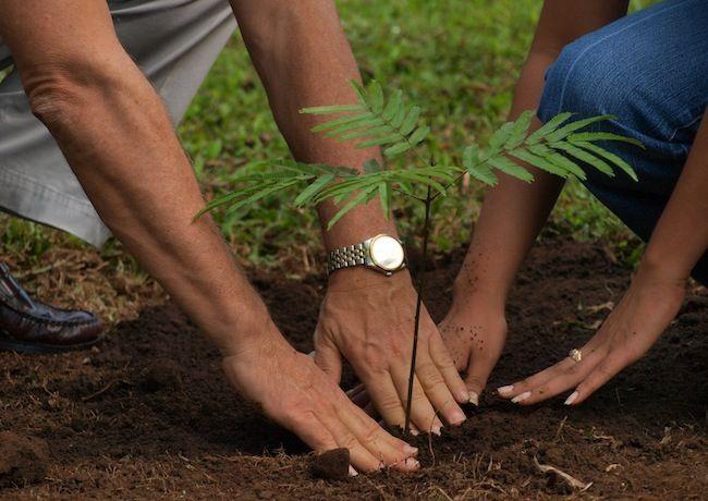 Consejos verdes para el Hogar - plantar un árbol