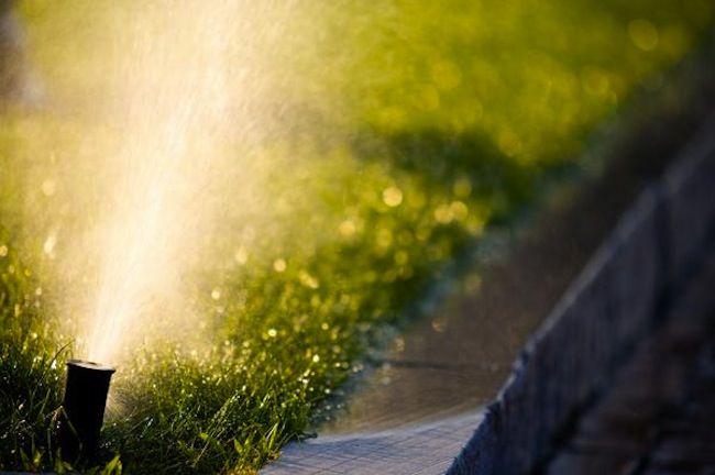 Consejos verdes para el Hogar - Plantas de riego