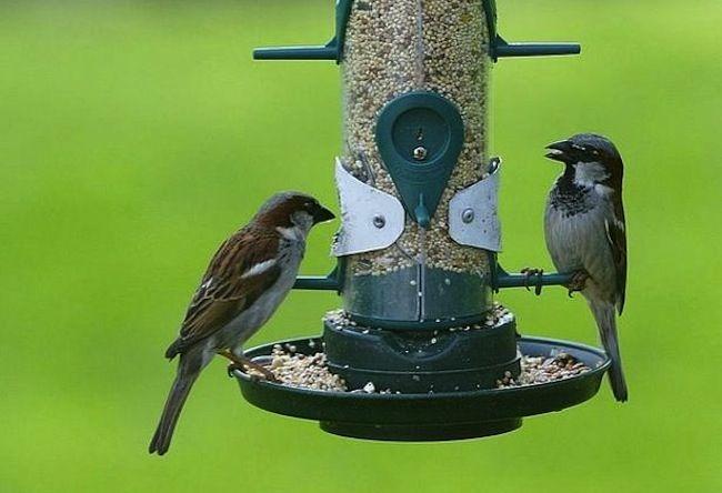 Consejos verdes para el Hogar - Birdfeeder