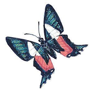 Fotografía - Mariposas y polillas