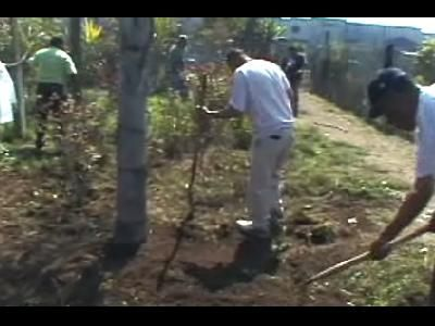 Carrete Impacto: El Jardín