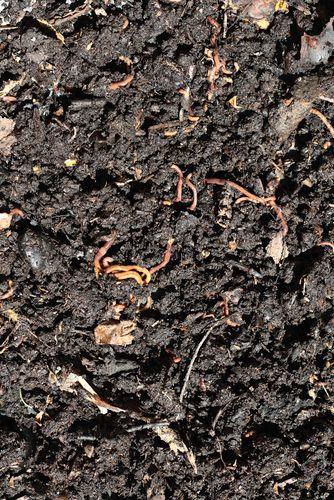Lombricultura - Compost