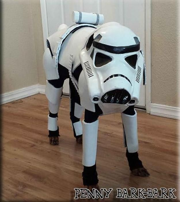 Star Wars Stormtrooper traje del perro de bricolaje, ver más a http://artesaniasdebricolaje.ru/diy-dog-costume-ideas-halloween-fun-for-your-pooch