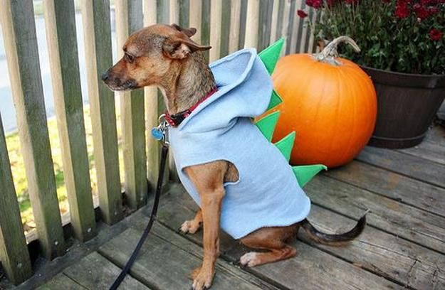 dinosaurios DIY traje del perro, ver más a http://artesaniasdebricolaje.ru/diy-dog-costume-ideas-halloween-fun-for-your-pooch