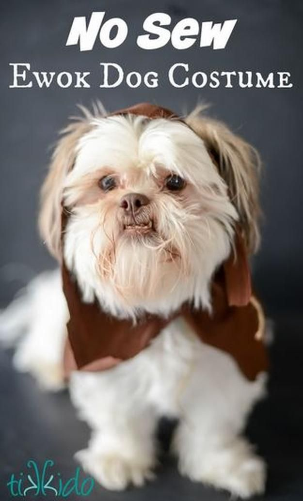 Star Wars Ewok DIY perro traje, ver más a http://artesaniasdebricolaje.ru/diy-dog-costume-ideas-halloween-fun-for-your-pooch