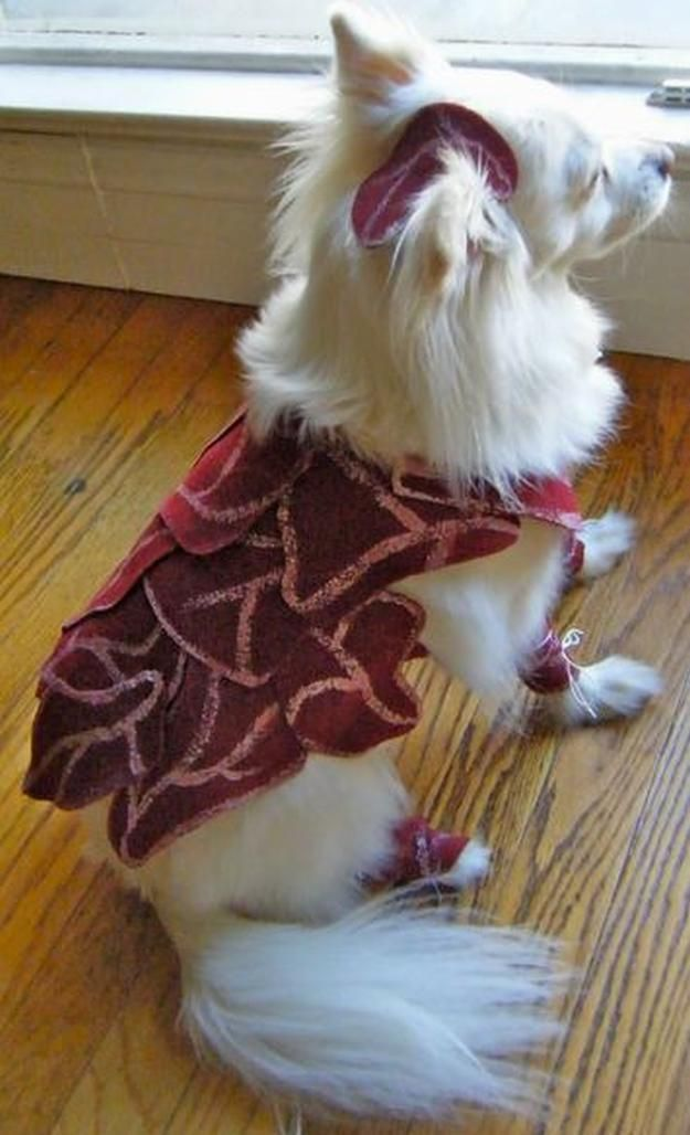 Lady Gaga traje del perro de bricolaje, ver más a http://artesaniasdebricolaje.ru/diy-dog-costume-ideas-halloween-fun-for-your-pooch