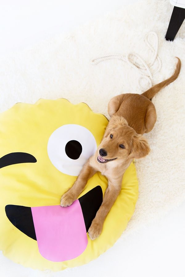Fotografía - DIY Cama Emoji perro