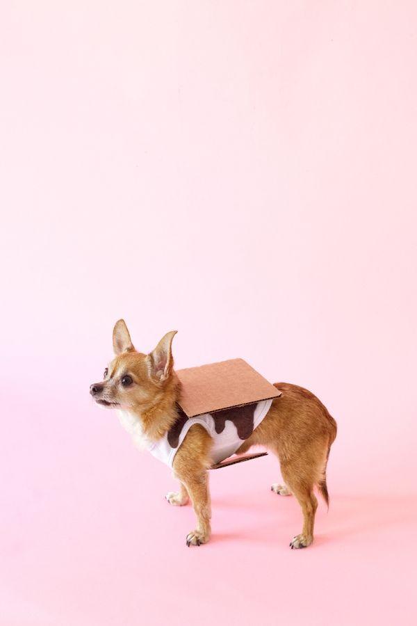 Fotografía - DIY S'mores vestuario perro