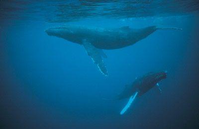 Fotografía - No ballenas y delfines duermen?