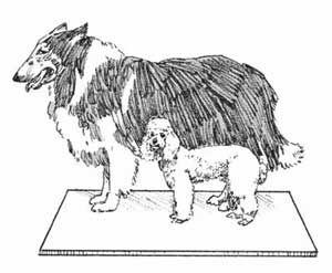 Fotografía - Consejos para el cuidado del perro