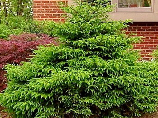 Fotografía - Arbustos enanos y más