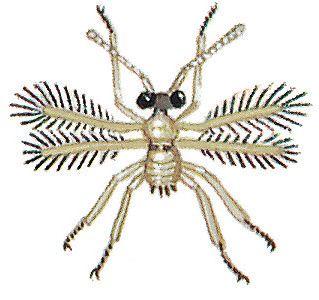 La mosca de hadas