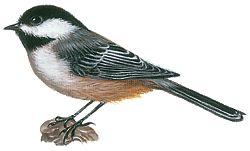 El pájaro del estado