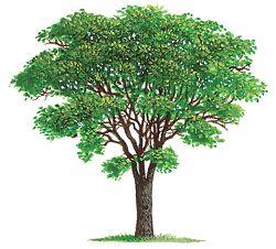 El árbol del estado
