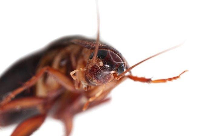 Fotografía - Consiguió plagas? Consejos de un experto para disuadir a tener invitados no deseados