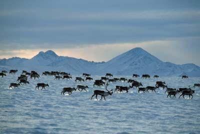 Fotografía - Cómo funciona la migración de animales