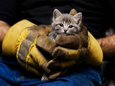 Trabajador de rescate celebración gatito.