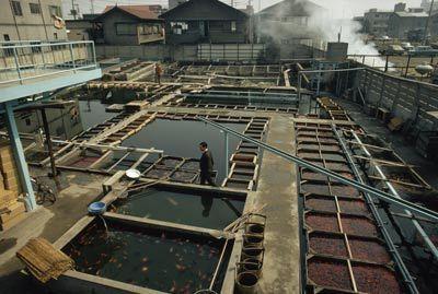 Fotografía - ¿Cómo funciona la acuicultura