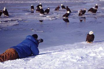 pájaros hombre fotografiando