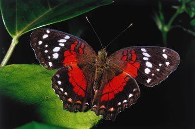 Fotografía - ¿Cómo funcionan las mariposas