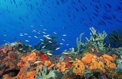 Fotografía - Trabajo arrecifes de coral Cómo