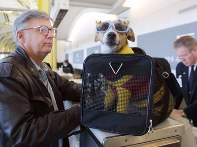 Fotografía - ¿Cómo se determinan las líneas aéreas lo caro un billete de avión mascota es?