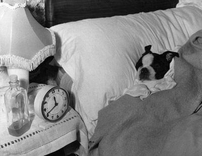 Fotografía - ¿Cómo hacen los perros perciben el tiempo?