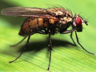 Fotografía - ¿Cómo respiran las moscas?
