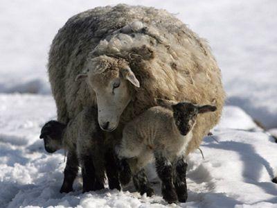 Fotografía - ¿Cómo lana a mantenerse caliente incluso cuando está mojado?