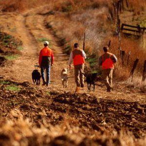 Fotografía - Cómo cazar con perros obras