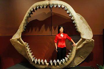 Una mujer se encuentra dentro de un modelo de resina enorme de mandíbulas megalodon.