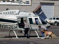 Fotografía - ¿Cómo los perros de búsqueda y rescate trabajan