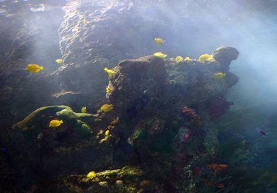 Cómo funciona el Georgia Aquarium