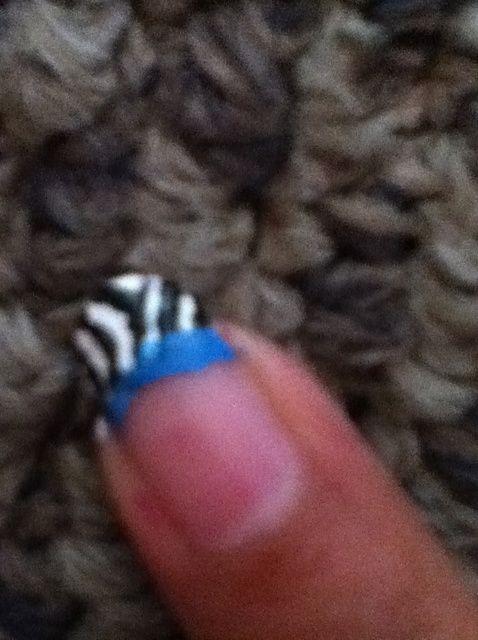 Cómo cebra azul Tip Francés