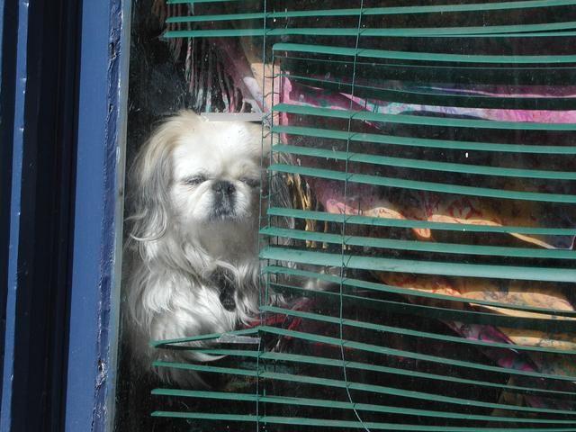 2 Años de perro = 24 años humanos. Ponte en sus zapatos perros, o debería decir las patas! A nadie le gusta estar arriba encerrado en la casa. Lleve a su perro al aire libre en una correa un poco de aire fresco y ejercicio.
