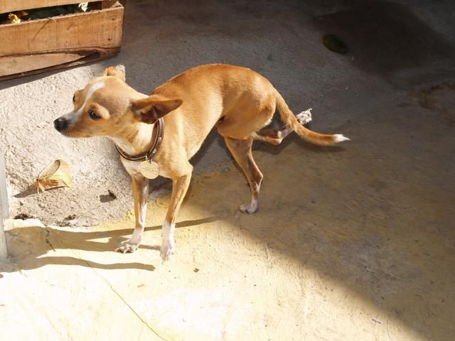 10 años del perro = 56 años humanos. Ello's your responsibility to care for your dog. If he needs help, please take him to the vet. See that he gets vaccine to protect from rabies. SPAY OR NUETUR YOUR PET!